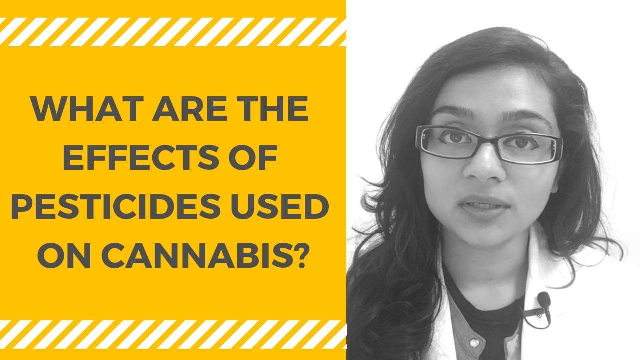 What are the Effects of Pesticides used on Cannabis?